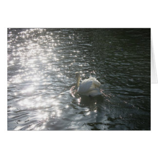 Swan Basking in the Sunshine on The River Greeting Card