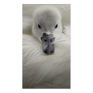 Swan, Beautiful White Feathers, Beauty Comfort Business Cards