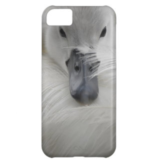 Swan, Beautiful White Feathers, Beauty Comfort iPhone 5C Case