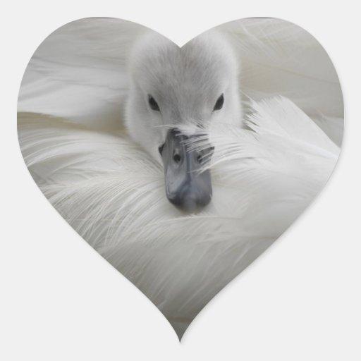 Swan, Beautiful White Feathers, Beauty Comfort Stickers