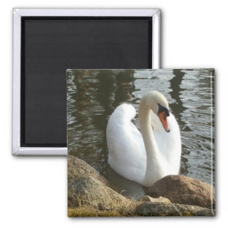 Swan bird | square magnet