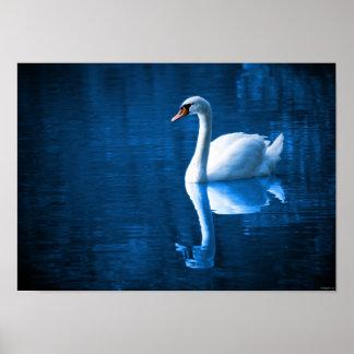 Swan Bird Water Nature Beautiful Poster