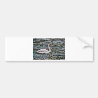 Swan Bumper Sticker