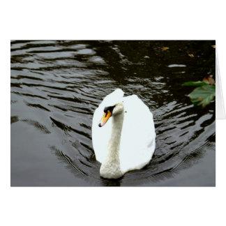 Swan. Greeting Card