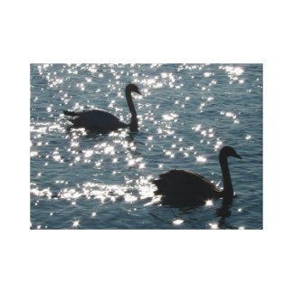 Swan couple in sunlight gallery wrapped canvas