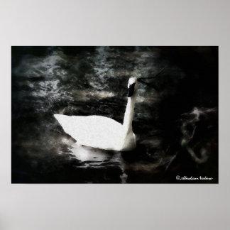 Swan (Drybrush) Canvas Poster