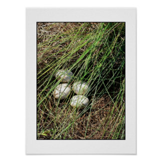 Swan Eggs Poster