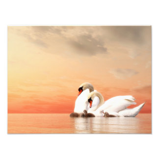 Swan family by sunset art photo