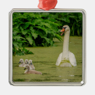 Swan Family Christmas Ornament