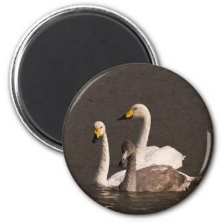 Swan Family Magnet