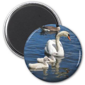 Swan Family ~ magnet