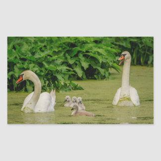 Swan Family Rectangular Sticker
