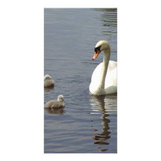 Swan Family with mom and ducklings or cygnets Photo Card Template