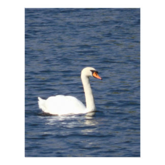 Swan Full Color Flyer
