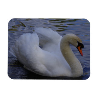 Swan Fridge Magnet