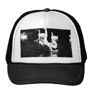 Swan Mesh Hat