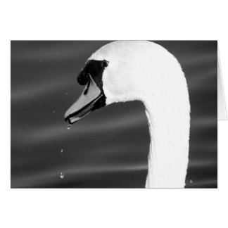 Swan in black and white card