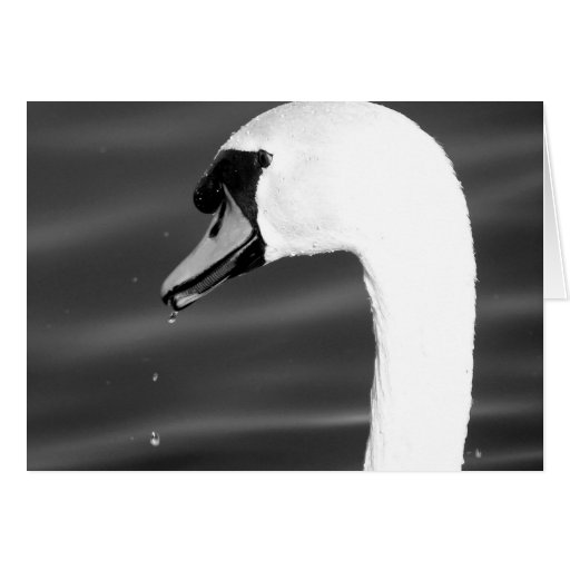 Swan in black and white cards