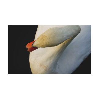swan in black canvas prints