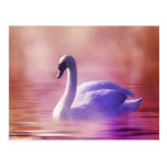 Swan in colorful moonlight postcards