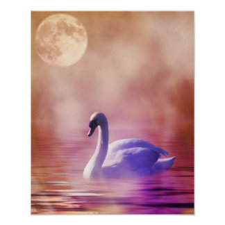 Swan in colorful moonlight poster