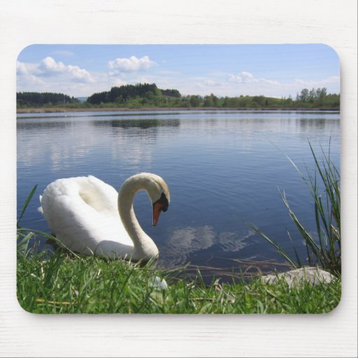 Swan In Lake Mousemats