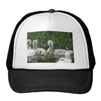 Swan in Wonder Cap