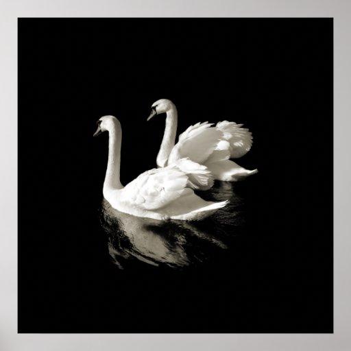 Swan Lake - Black and White poster