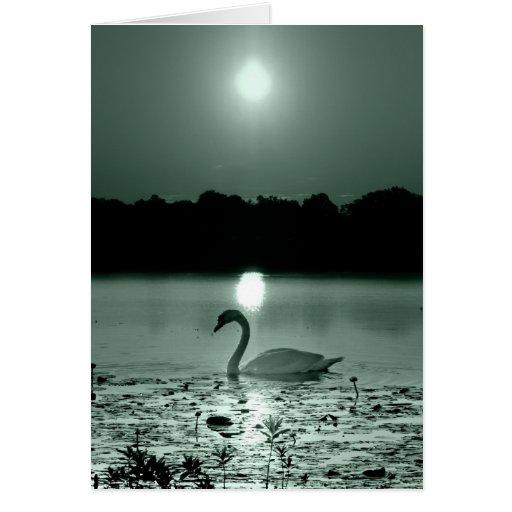 Swan Lake Cards