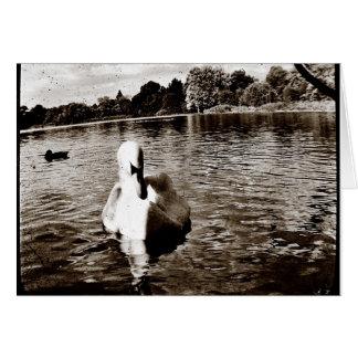 Swan Lake Greeting Cards