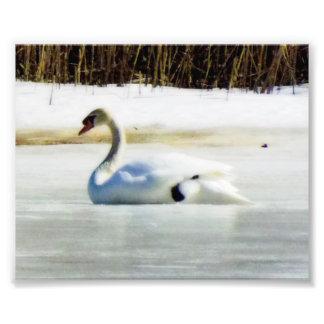Swan Lake in winter print Photograph