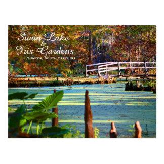 Swan Lake Iris Gardens, Sumter, South Carolina Postcard