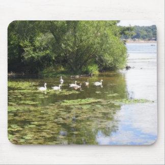 Swan Lake Mouse Pads