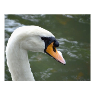 Swan looking right head view bird image custom flyer