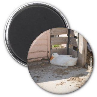 Swan Fridge Magnets