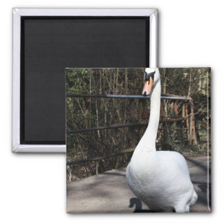 Swan Magnets
