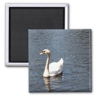 swan refrigerator magnet