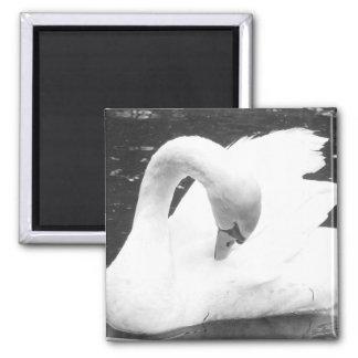Swan of the Lake--Black and White Fridge Magnet