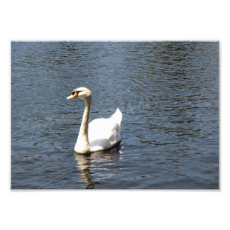 Swan on a lake art photo