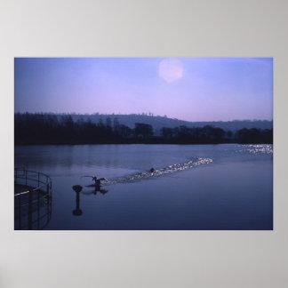 Swan on English lake Poster