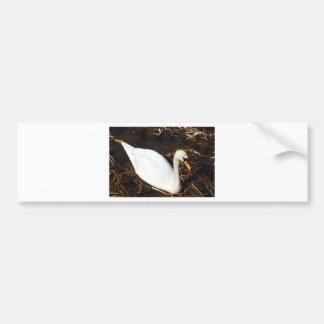Swan on  Lake Bumper Sticker