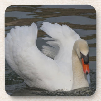 swan on lake coaster