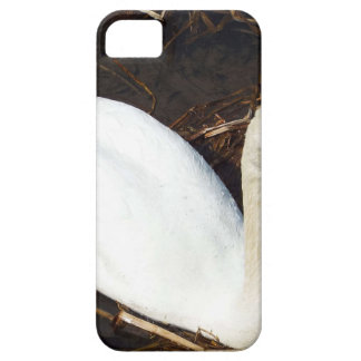 Swan on  Lake iPhone 5 Cases