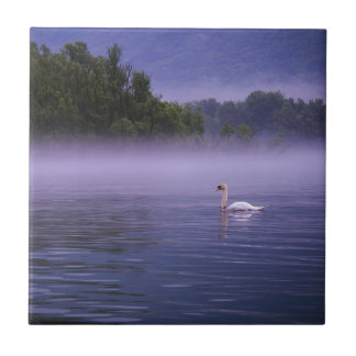 Swan on lake small square tile