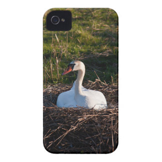 Swan on nest Case-Mate iPhone 4 cases