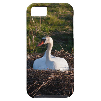 Swan on nest iPhone 5 cover