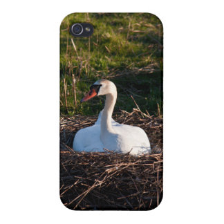 Swan on nest iPhone 4/4S covers