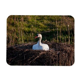 Swan on nest magnet