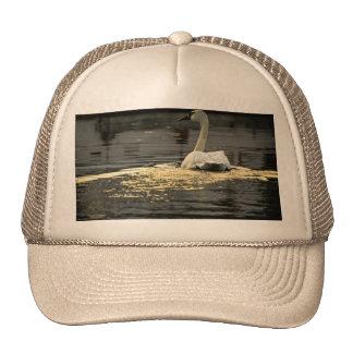 Swan on the water trucker hats