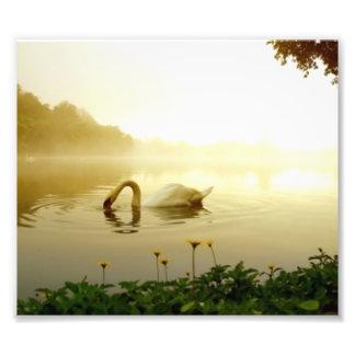 Swan Photo Art